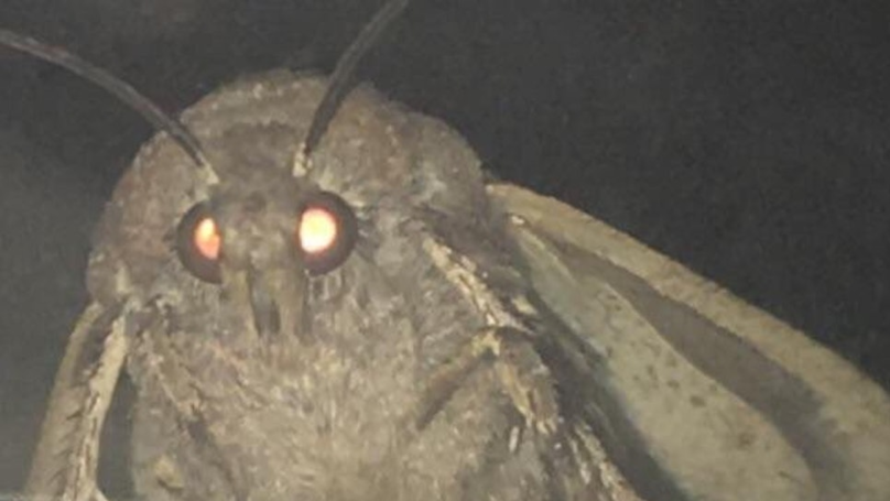 ​Lamp Moth Meme Creator Seeking Legal Advice Over New 'Fortnite' Skin