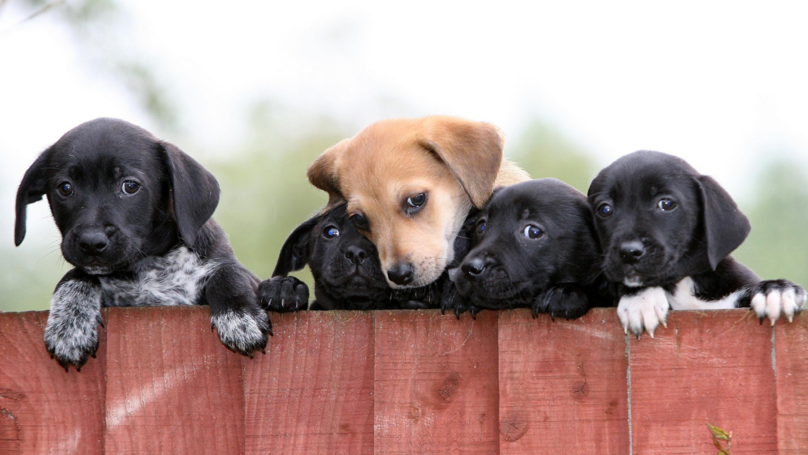 UK Ministers Consider Pet Shop Puppy Ban