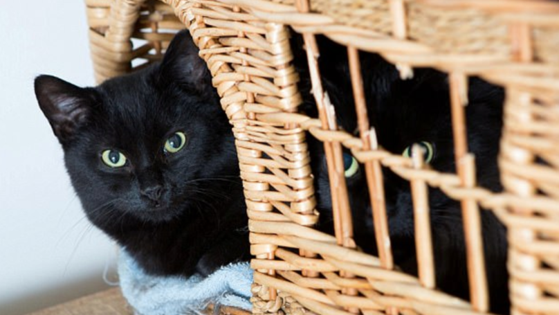 Black Cats Can't Be Rehomed Because 'They Don't Show Up In Selfies'