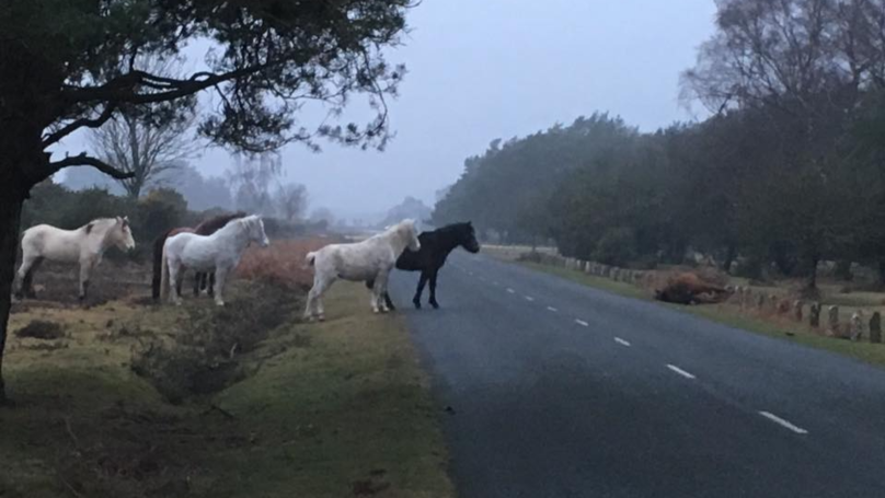 ​Heartbreaking Photo Shows Pony Killed By Motorist