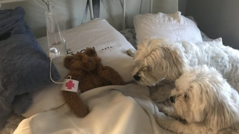 Dad Creates Makeshift Hospital After Dog's Toy Is Left Outside