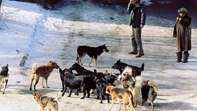 Petition Launched To Stop Killing Of Stray Dogs Ahead Of Russia World Cup