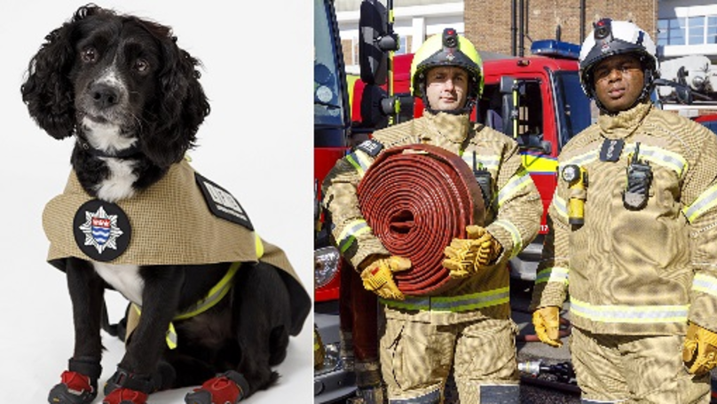London Fire Brigade's Dogs Have Their Own Uniform And It's Adorable