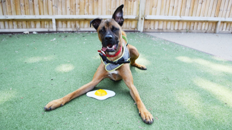 ​Timmy The Dog Looking For Loving Home After 426 Days In Kennels