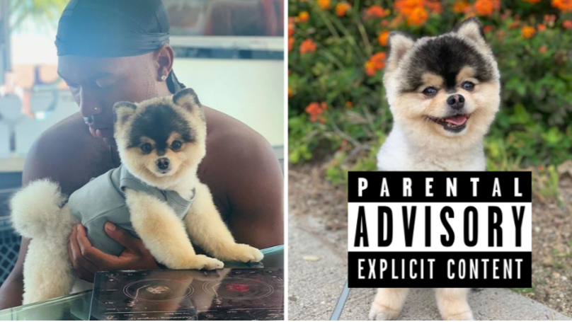 A Rap Song For Daniel Sturridge And His Dog Has Been Made And It's Absolutely Outstanding