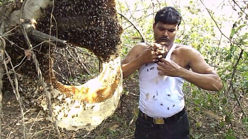 Honey Collector Uses Bare Hands To Put Thousands Of Bees Down His Shirt