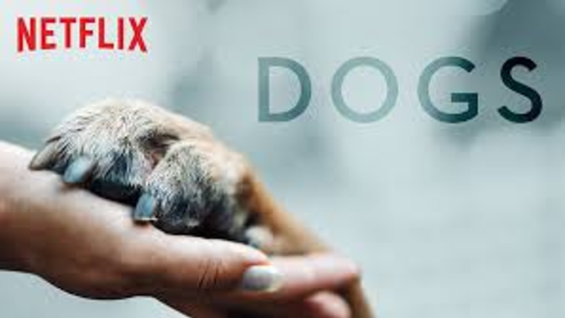 Netflix Is Looking For Dogs To Star In A Documentary Series
