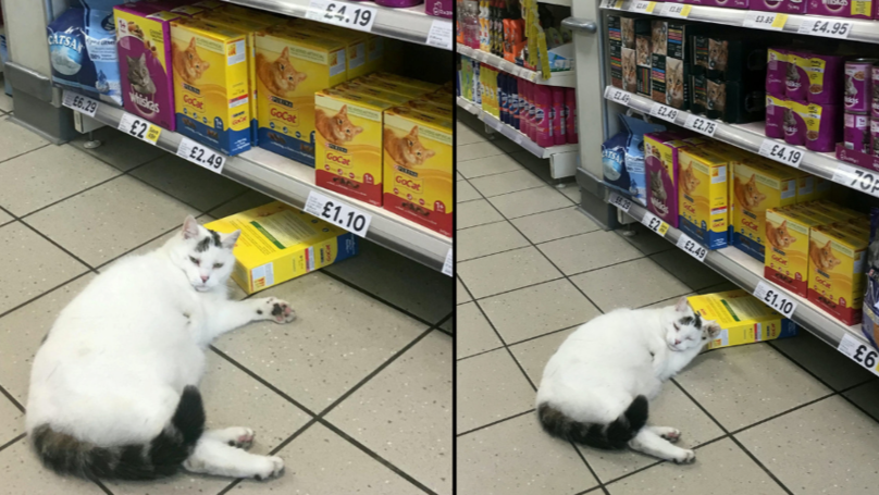 Cat Walks Into Tesco Helps Himself To Some Food Then Has A Nap