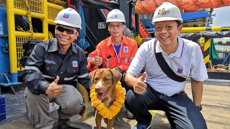 Oil Rig Workers Rescue Exhausted Dog Found Paddling In The Sea 220km From Shore