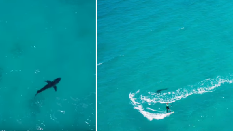 Drone Footage Captures Great White Shark Circling Kitesurfer