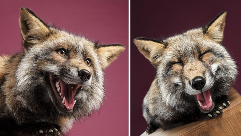 Think You Know What A Fox Looks Like? Check Out This Amazing Photoshoot