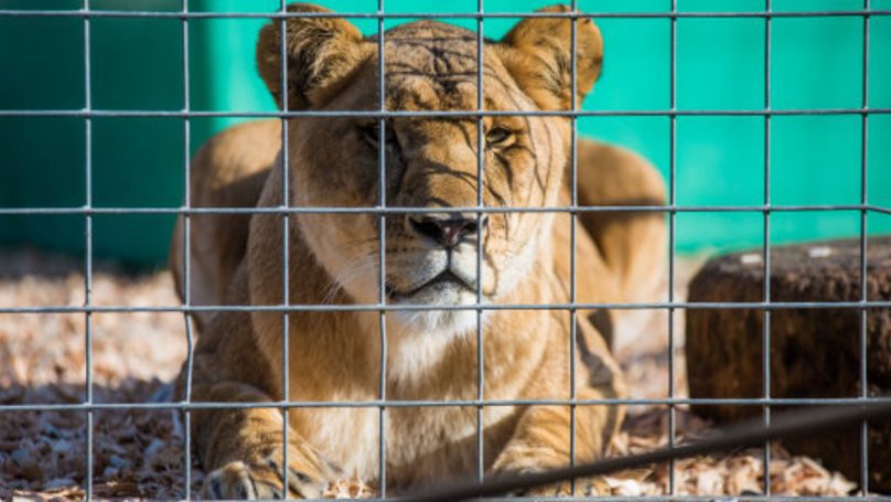 England Set To Ban Wild Animals From Travelling Circuses By 2020