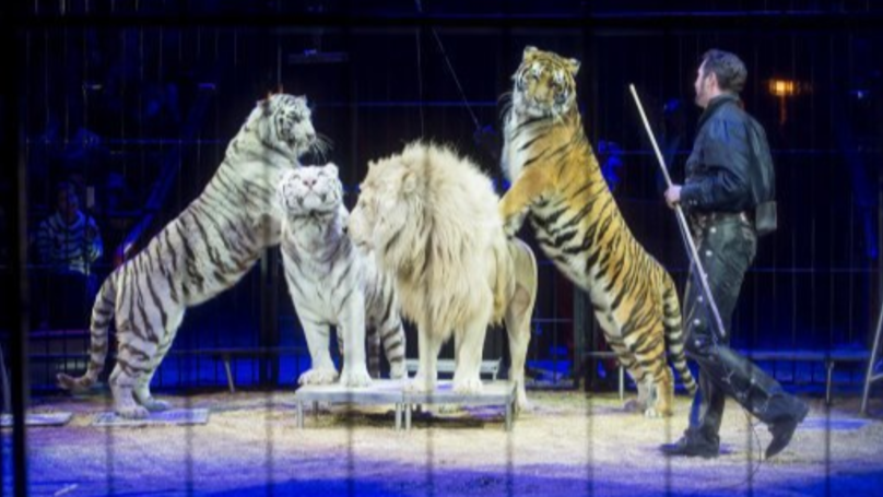 Travelling Circuses To Be Banned From Using Wild Animals In England