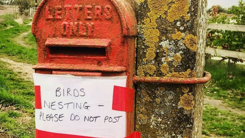 Royal Mail Closes Norfolk Post Box As Birds Are Nesting Inside