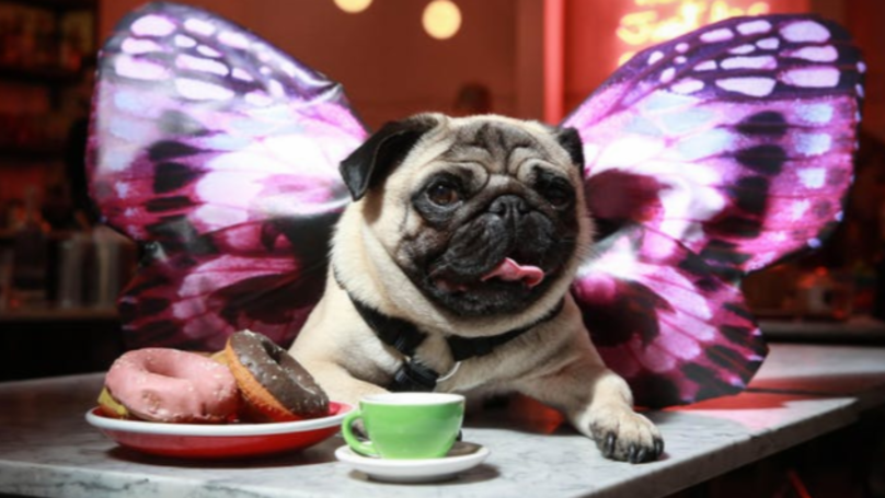 This Pug Brunch Has Bottomless Prosecco And Is Only A Fiver