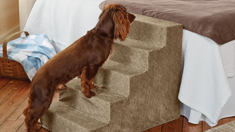 You Can Now Buy Stairs To Help Your Dog Onto The Bed