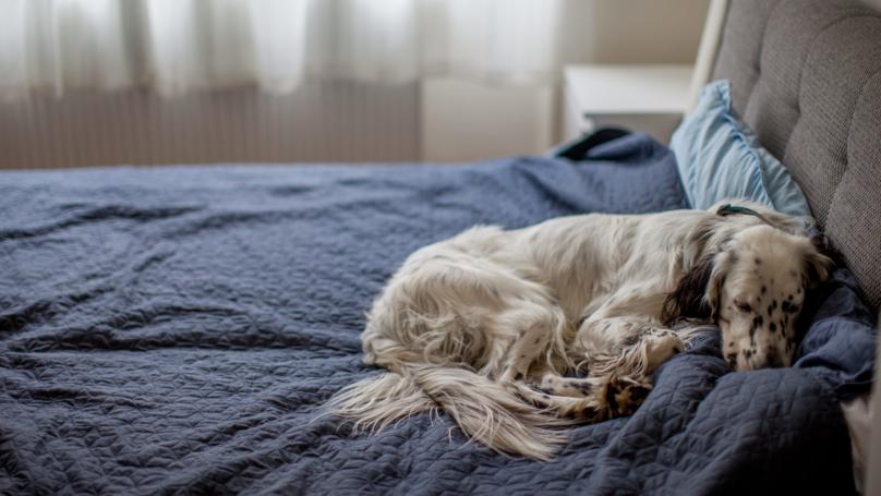 Women Sleep Better Next To A Dog Than A Man, Study Finds