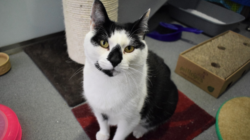 'Britain's Loneliest Cat' Is Still Looking For A New Home
