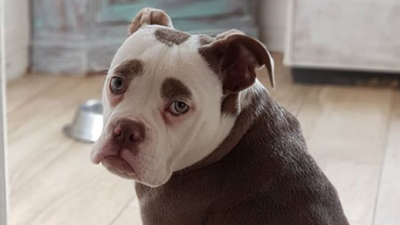 ​Meet The Pooch Who Always Looks Like A Sad Clown