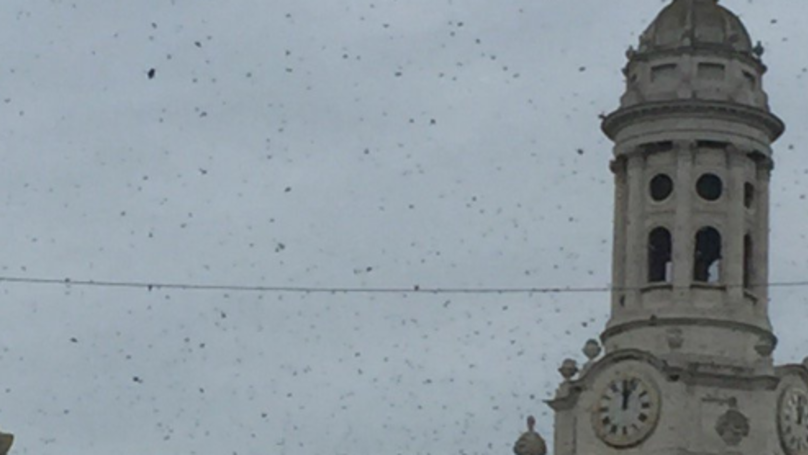 Bee-zarre: Huge Swarm Of Bees Hits London And Brings Traffic To A Standstill