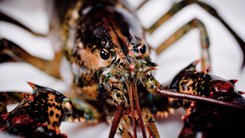 Giant 10kg Lobster Surprises Airport Security During Luggage Inspection