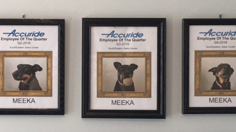 Guy Who Works From Home Continually Names Dog As Employee Of The Quarter