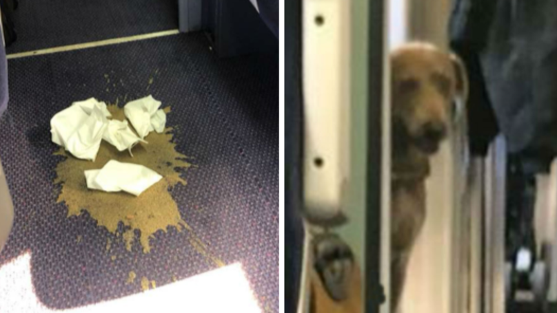 Passengers Forced To Endure Four-Hour Train Journey With Pile Of Dog Poo