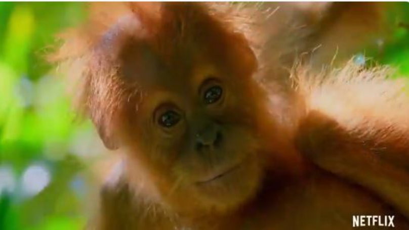 Netflix Shares Stunning Footage From David Attenborough's New Documentary