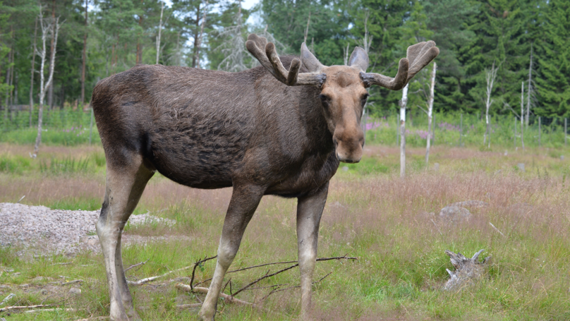 Hunter Shoots Son Dead After Mistaking Him For Moose