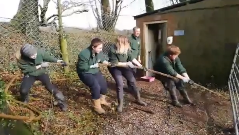 Zoo Sparks Fury For Letting Children Play Tug Of War With Tiger And Lion