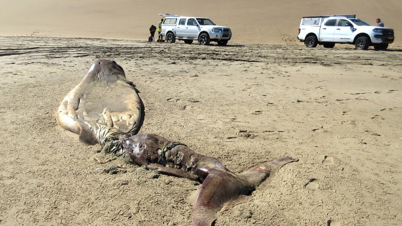 Bizarre Rotting Sea Creature Washes Up On The Coast Of Namibia