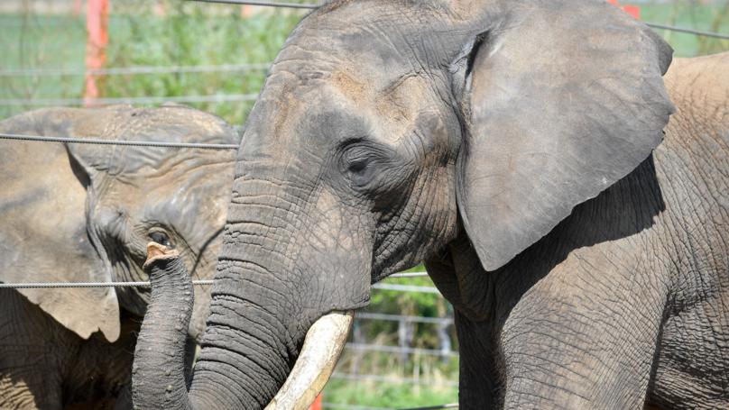 UK Takes Important Step Towards Ivory Ban
