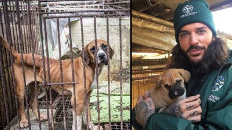 TOWIE's Pete Wicks Rescues 150 Dogs From Korean Meat Farm