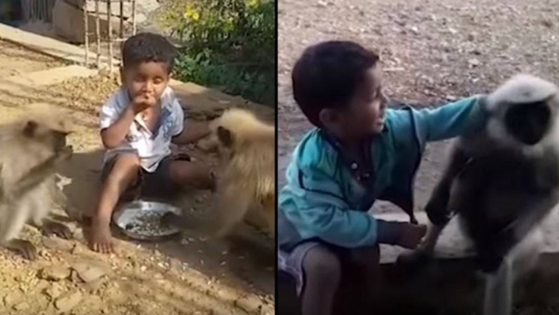 Young Toddler Befriends Monkey Tribe In Amazing Bond Between Distant Relatives