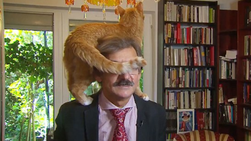 Cat Interrupts TV Interview With Polish Academic