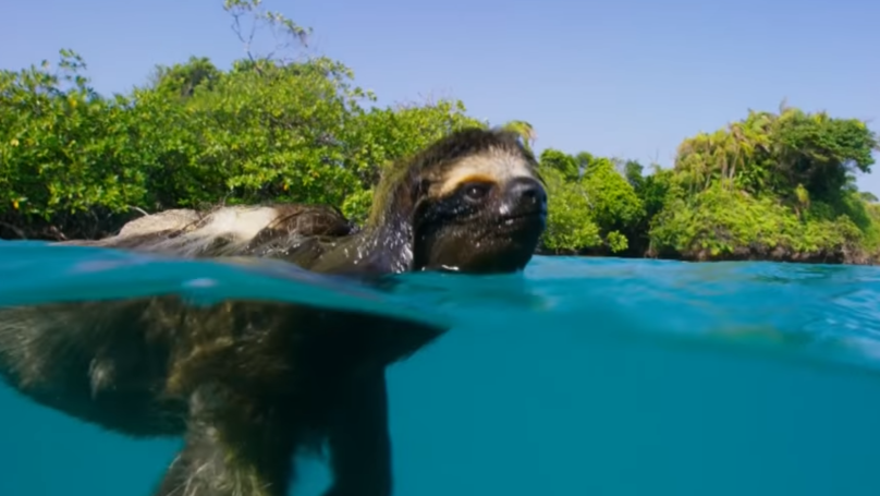 Everyone F*cking Loved The Return Of 'Planet Earth'
