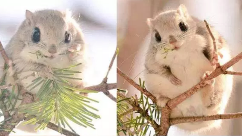 These Cute Little Squirrels Can Only Be Found On An Island In Japan