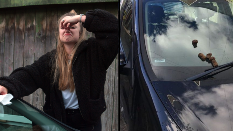 Student Finds Human Poo On Her Car For Second Time In Ten Days