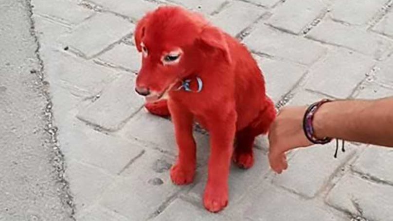 Charity Rescues Dog Dyed Red From Owner 'Who Bought It As He Liked The Colour'