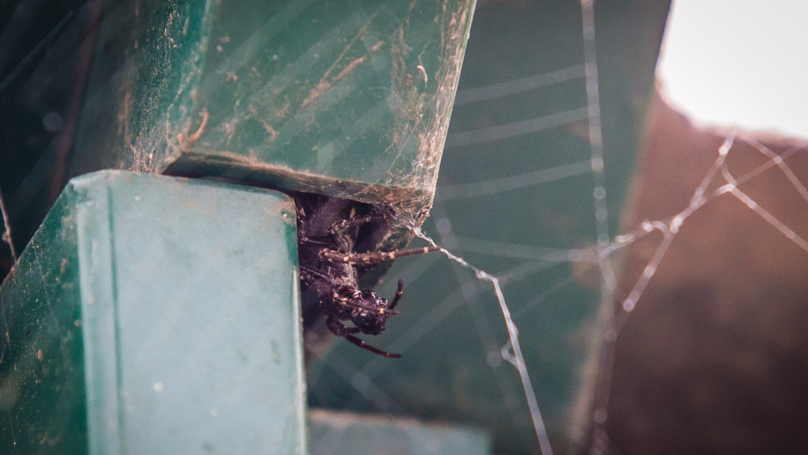 False Widow Spiders Have Taken Over This Bus Stop And They're Not Leaving