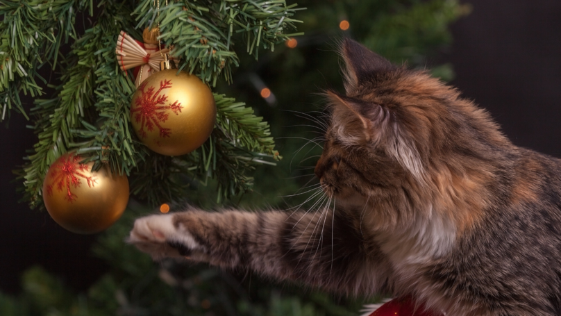 Argos Is Selling Half Christmas Trees For Cat Owners