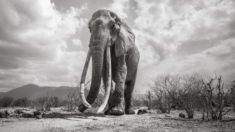 British Photographer Captures Last Images Of Kenya's 'Elephant Queen' Before Her Death