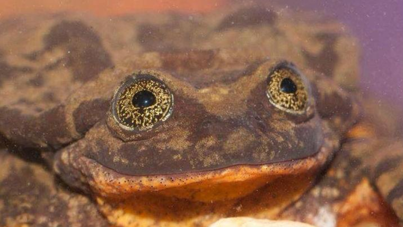 ​The World's 'Loneliest' Frog Has Found Himself A Date