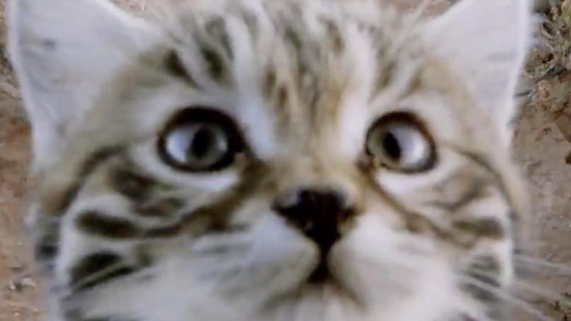 Meet The World's Deadliest (And Cutest) Cat