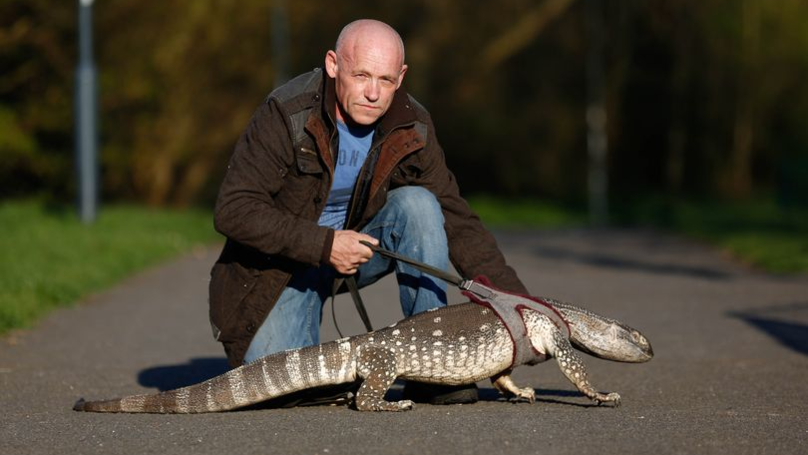 Man Told He Can Only Walk Giant 5ft Lizard On A Lead