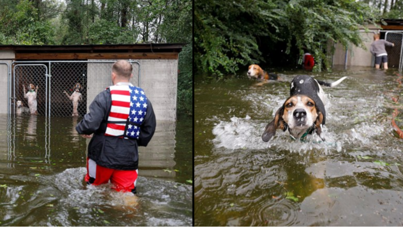Hurricane Florence Hero Volunteer Saves Six Dogs Abandoned In Locked Cage