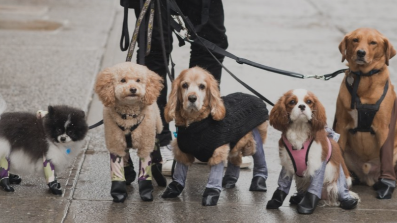 Dog Leggings Now Exist To Protect Your Pet In The Winter Months