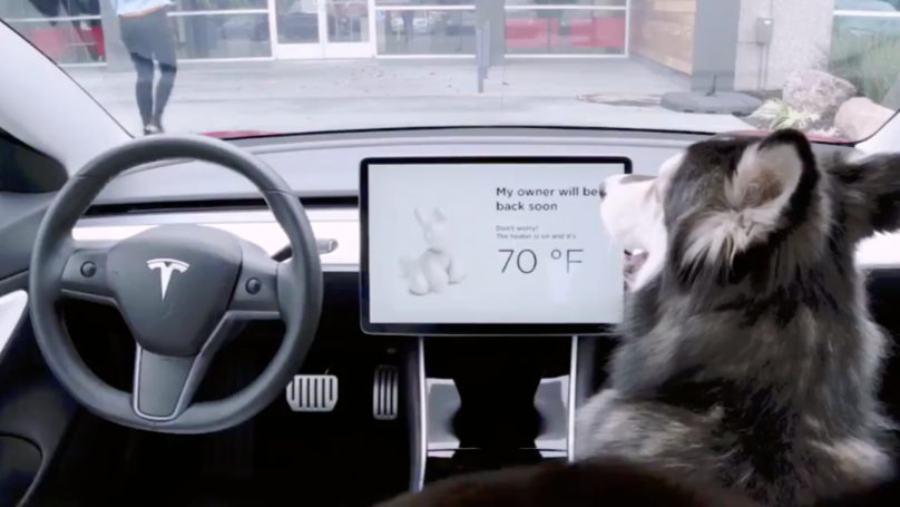 Tesla Debuts New Feature That Tells You If Your Pet Is Okay