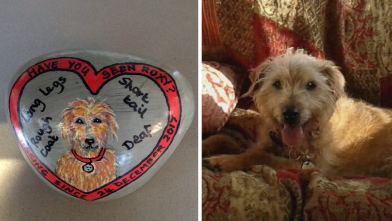 Heartbroken Dog Owners Have Portrait Painted On Pebbles To Find Missing Pet