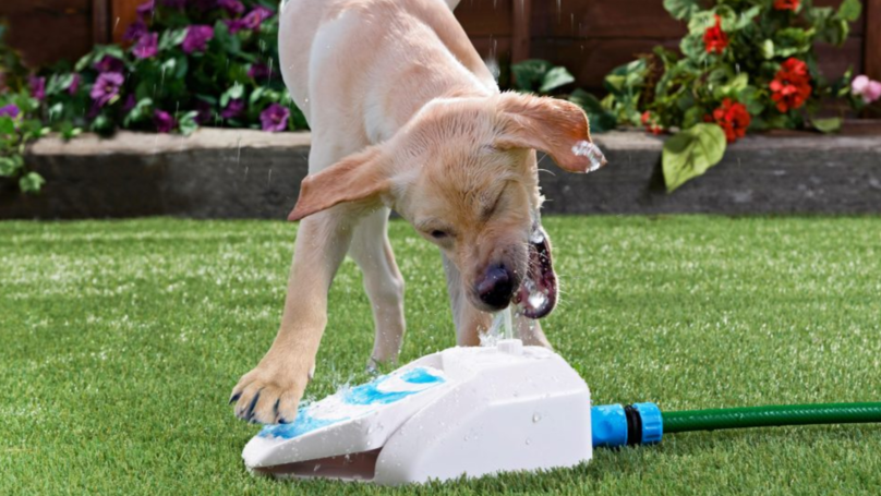 You Can Now Get Water Fountains For Your Dog